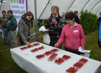 Raspberry tasting session at Fruit for the Future 2015 (c) James Hutton Inst