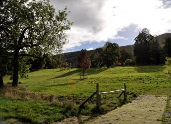 Falkland forest, Fife (c) James Hutton Institute
