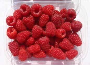 Punnet of Glen Carron raspberries (c) James Hutton Limited