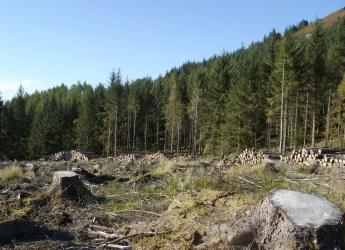Forestry in a mountain ecosystem (c) James Hutton Institute