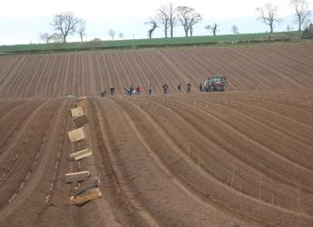 Potato planting at Balruddery Farm (c) James Hutton Institute