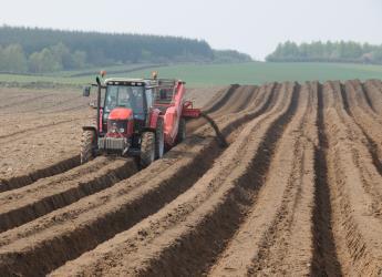 Potato beds at Balruddery Farm (c) James Hutton Institute