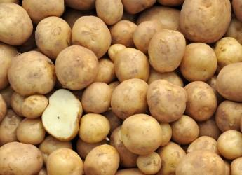 Potatoes (c) James Hutton Institute
