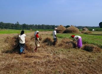 Rice paddy harvest in India (Bishnu Sarangi/Pixabay)