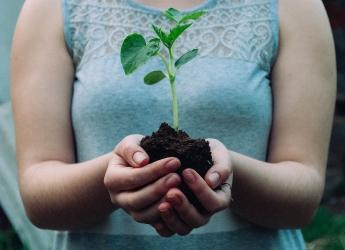 No soil means no life (Photo: Nikola Jovanovic/Pixabay)