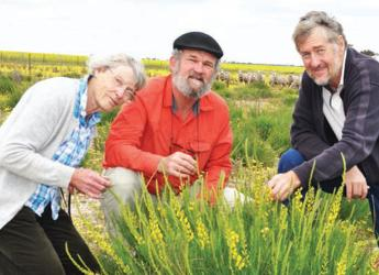 Professors Sprent, Van Wyk and Howieson examine a Lebeckia plant © J Sprent