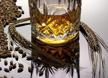 Barley and whisky (c) James Hutton Institute