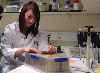 Dr Kelly Houston, molecular geneticist, at work (c) James Hutton Institute