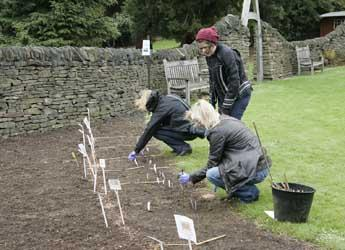 Members of the public help to plant the Genetics Garden