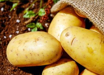 Potatoes (Image by Couleur from Pixabay)