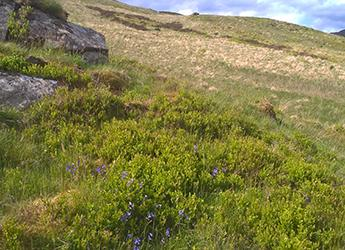 Land managers vital to the success of rewilding in the Scottish uplands