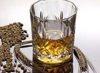 Glass of whisky and barley ears