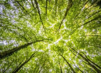 Worm's eyeview of green trees (Photo by Felix Mittermeier from Pexels)