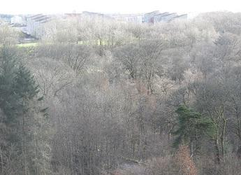 Woodland in Cumbernauld