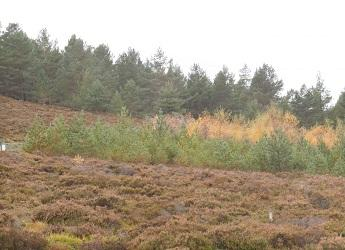 Trees colonising moorland