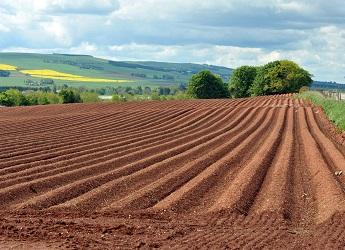 Work Package 1.1: Soils
