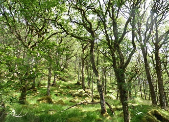 Ariundle oak wood - rich in biodiversity