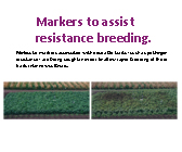 Markers to assist resistance breeding