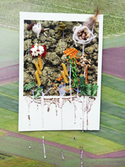 Picture made from grains in one of our Open Farm Sunday activities