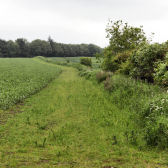 Photograph of 4 m field margin and perennial border