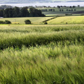 Photograph of barley fields at Balruddery