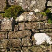 Photograph of an old drystane dyke with moss and lichen