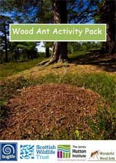 Front cover of the Wood Ant Activity Pack