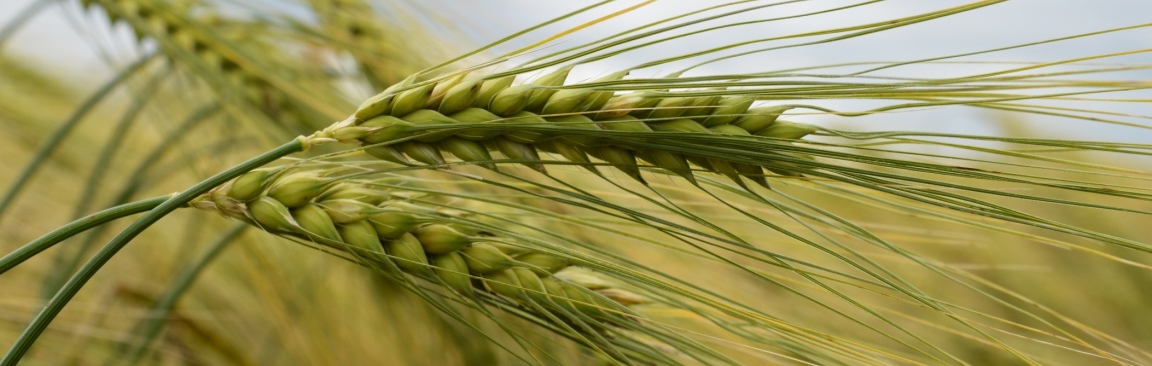The event aims to bring together key players in food production