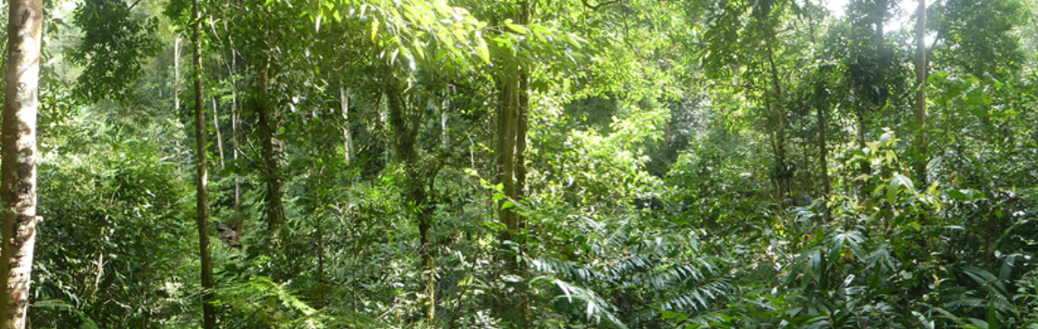Sarawak tropical forest (c) James Hutton Institute