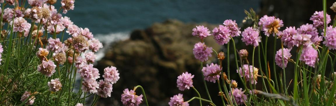 Wildflowers at Bullers of Buchan (Image: plushbearcat/Pixabay)