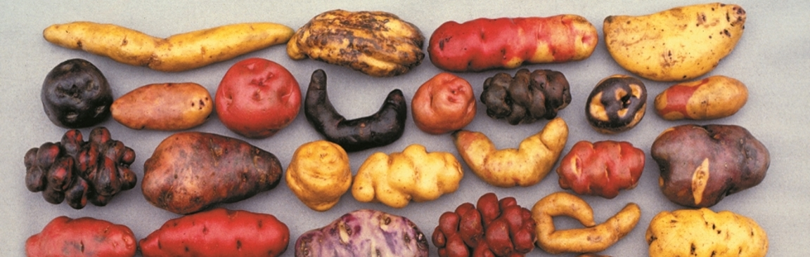Andean potatoes are an example of Peru's rich crop biodiversity