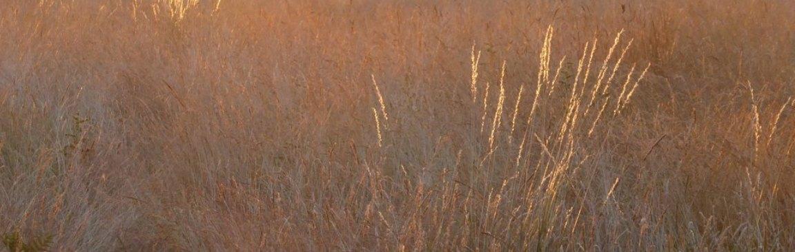 Grassland in a heatwave © Copyright Stefan Czapski, licensed for reuse under CCL