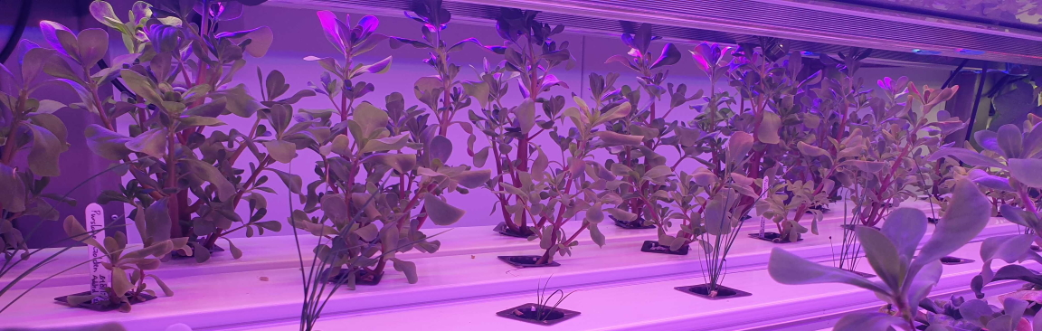 Liberty Produce's TCEA tech will support Singapore's vertical farming capability