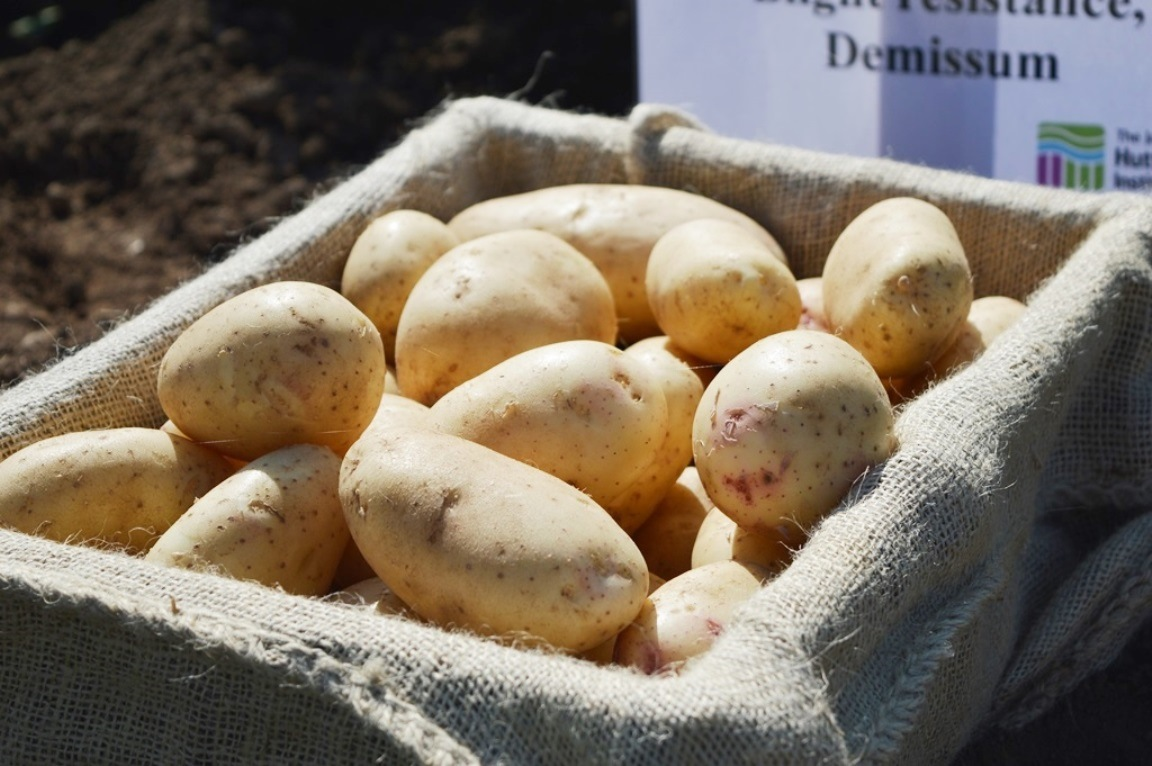 Potato exhibit at Potatoes in Practice (c) James Hutton Institute