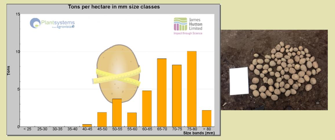 PotatoSize screenshot (c) James Hutton Institute