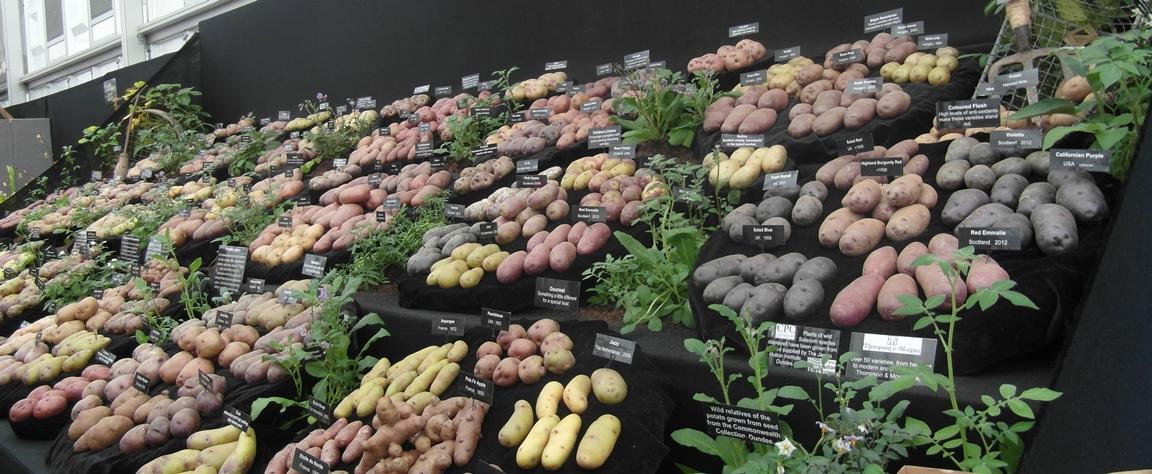 Potato Story display