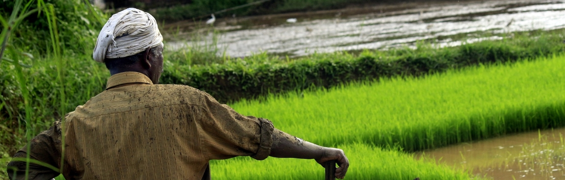 Rice paddies in Kerala, India (Nandhu Kumar/Pixabay)