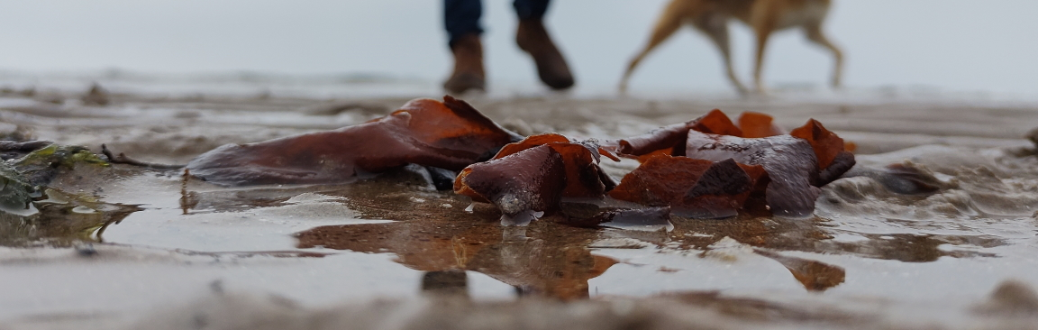 Seaweeds in a beach
