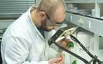 Photograph of scientist in the lab