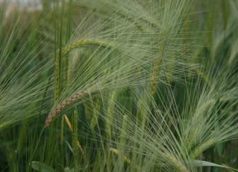 Key industry experts discuss world's first centre for barley research