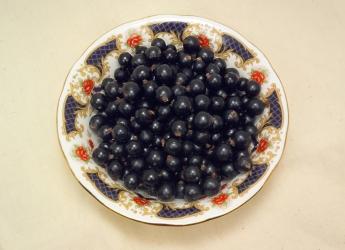 Berries (c) James Hutton Institute