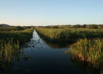 Conservation-managed fen in Anglesey (Image: Chris Evans, UKCEH)