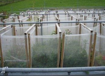 Crop mixtures experiment (c) Debra Zuppinger-Dingley