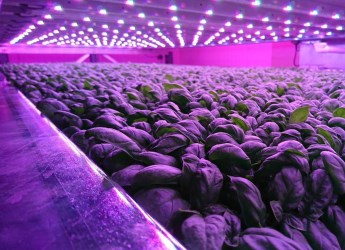 IGS' vertical indoor farming facility (courtesy IGS)
