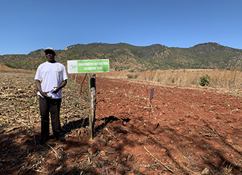 Research team aim to ensure maize crop stability in southern Africa