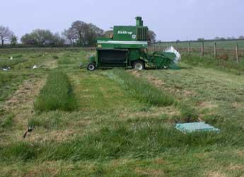 Novel grass Festulolium trial plot