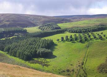 Agroforestry plots at Glensaugh