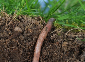 Life in soil (c) James Hutton Institute