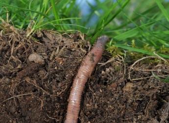 Life in soil (c) James Hutton Institute