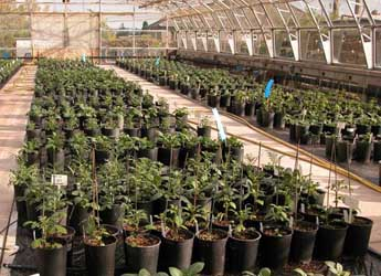 Photograph of the Commonwealth Potato Collection glasshouse